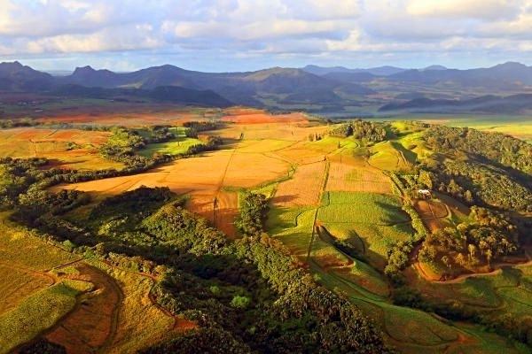 ILE MAURICE : Vue d'avion sur les champs de cannes à sucre