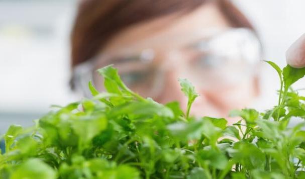 sciences de la vie biotechnologies ile maurice hub afrique biopark Socota laboratoire recherche essais nutraceutique