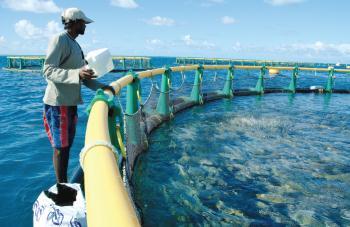 L'Ile maurice veut valoriser son potentiel dans la filière aquacole poissons seahub C'est une réelle opportunité d'investissement pour les étrangers