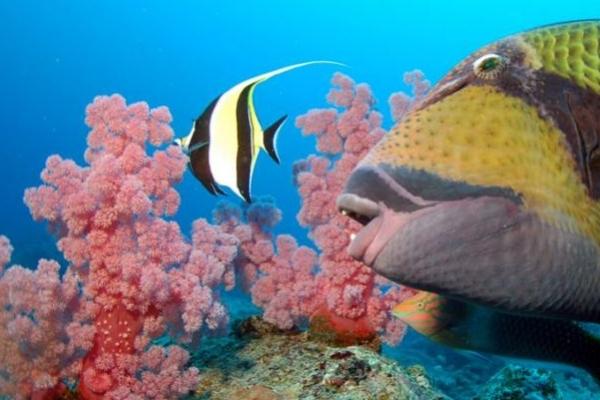 ILE MAURICE : Plongée sous marine dans le lagon