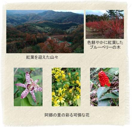 阿郷の里の四季~秋