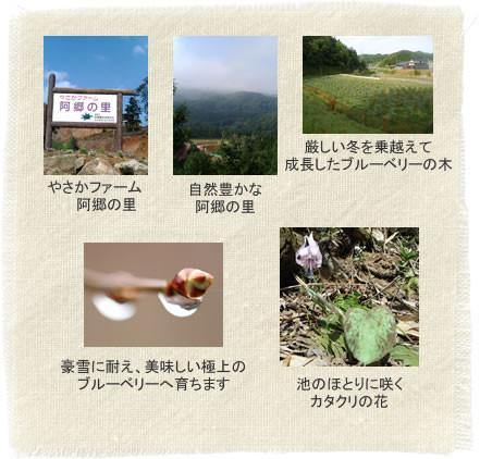 阿郷の里の四季~春
