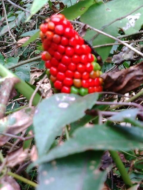 阿郷の里の秋を彩る可憐な花