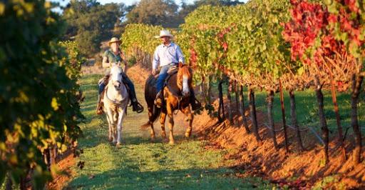 Passeggiata a cavallo nei Colli Euganeai