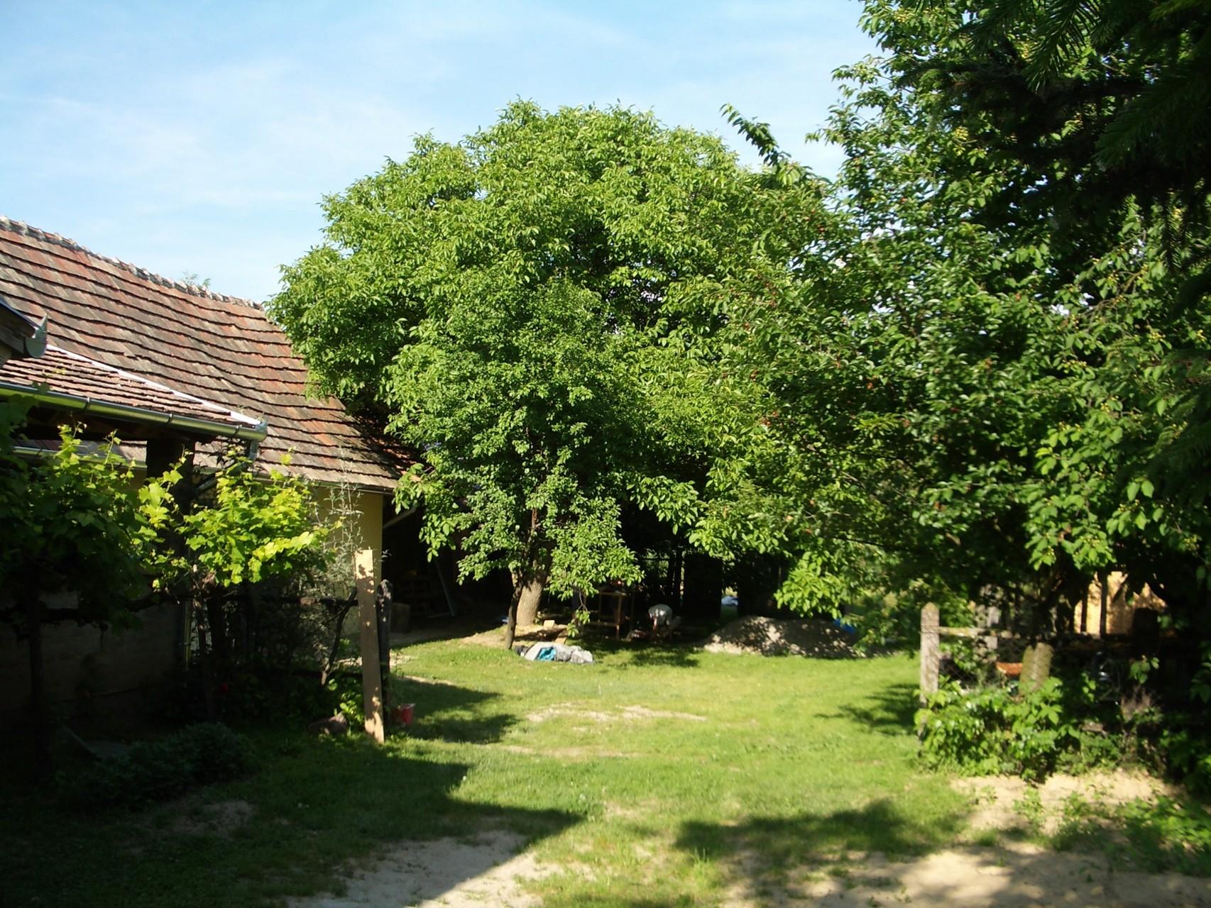 Garten mit großenNußbaum