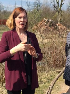 Wir befinden uns im Gelsenkirchener Zoo. Auf dem Bild sieht man mich im Vordergrund am Dolmetschen. Im Hintergrund sieht man sechs Giraffen, die fressen. Es ist schönes Wetter. Die Sonne scheint.