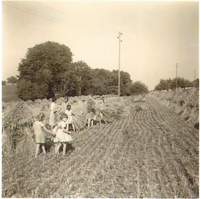 Annelise als Kind bei der Getreideernte