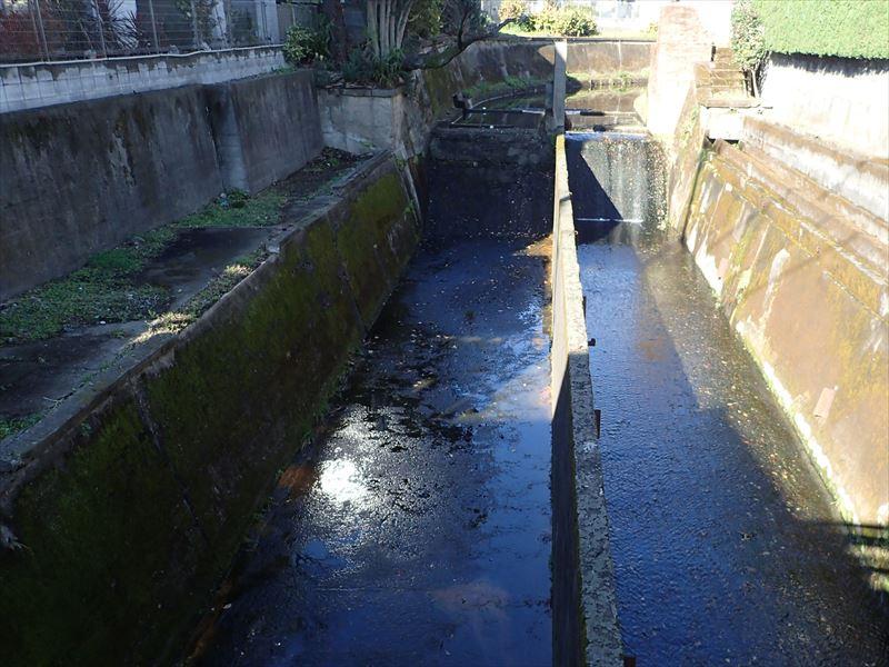 谷沢川 「姫の橋」から上流 段差があります