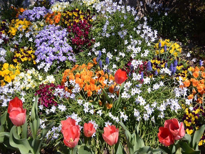 玉川中町公園 いつも綺麗なお花が咲いています