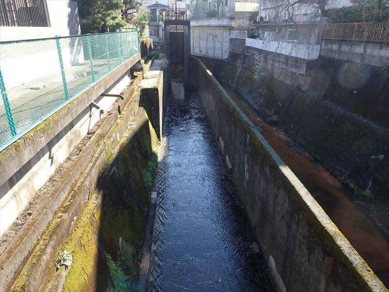 谷沢川 「姫の橋」から下流