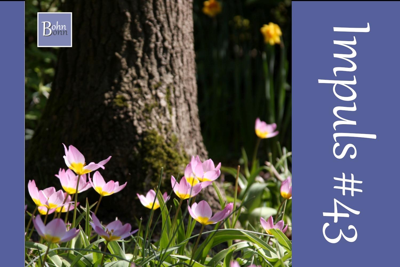 #43 - Fünf Fragen zum Frühling