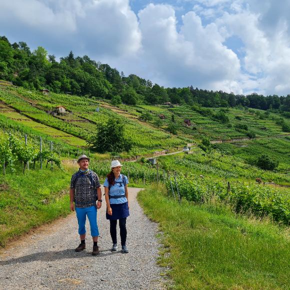 5 Wander- und Spazierwege durch Weinberge in der Region Stuttgart - Den Weinsüden zu Fuß erkunden - HVP174