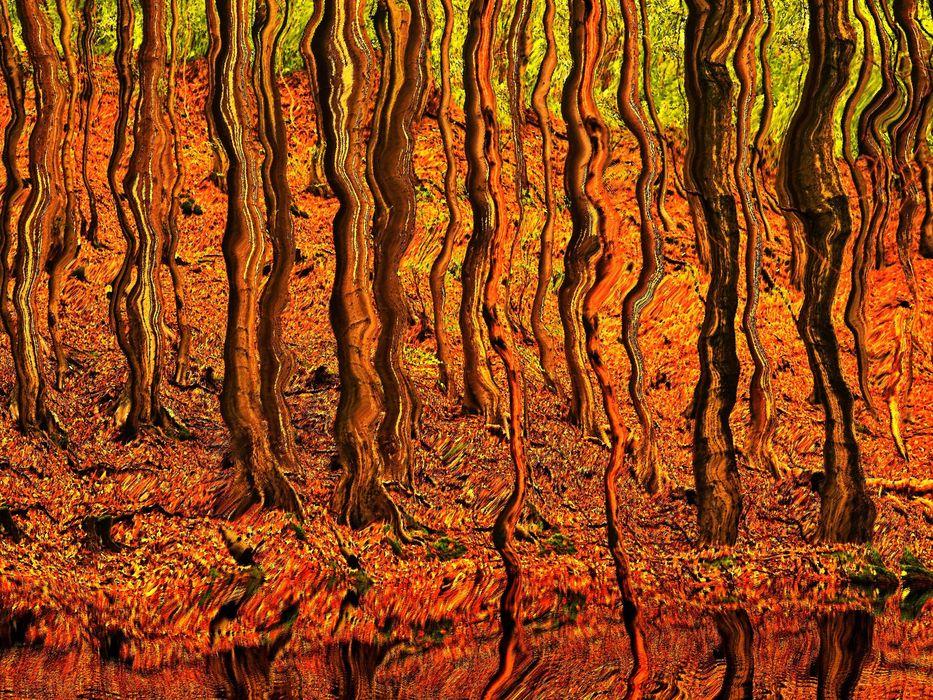 Bio-Resonanz©Wolfgang Roschen