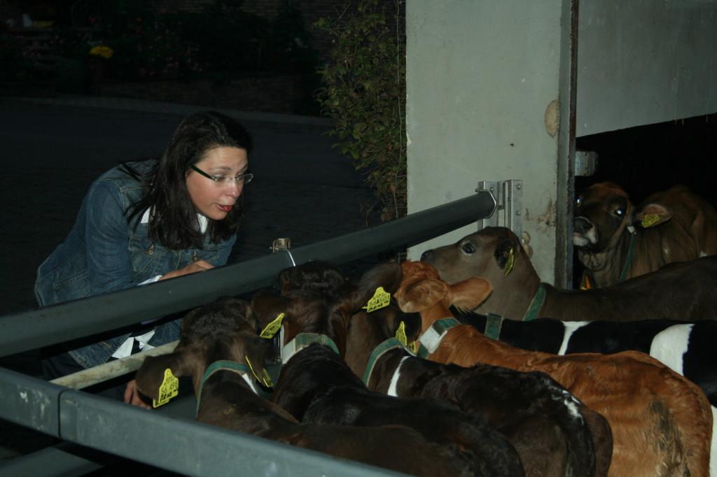 Auf Kirsten sind heute die Kälber besonders neugierig.