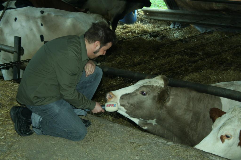 """Eine Kuh möchte auch noch was sagen: """"Schade, dass meine gute Milch so wenig wert ist."""""""