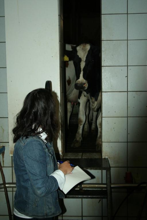 Volo Kirsten im Gespräch mit der Kuh.