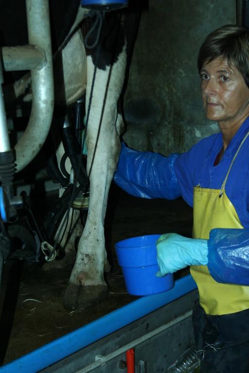Bäuerin Ursula Ludwig bedient fachfrauig das Melkgeschirr.  Fotos: Michael Bongard