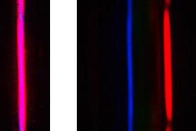 spectre d'une lumière polychromatique, hydrogène, magenta = bleu + rouge