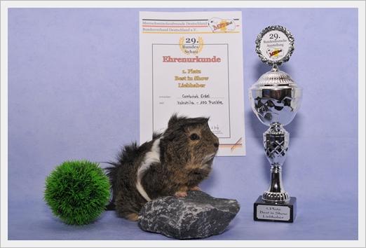 Auf der 29.Bundesdeutschen belegte Vokuhila den 1. Platz BEST IN SHOW LIEBHABER!