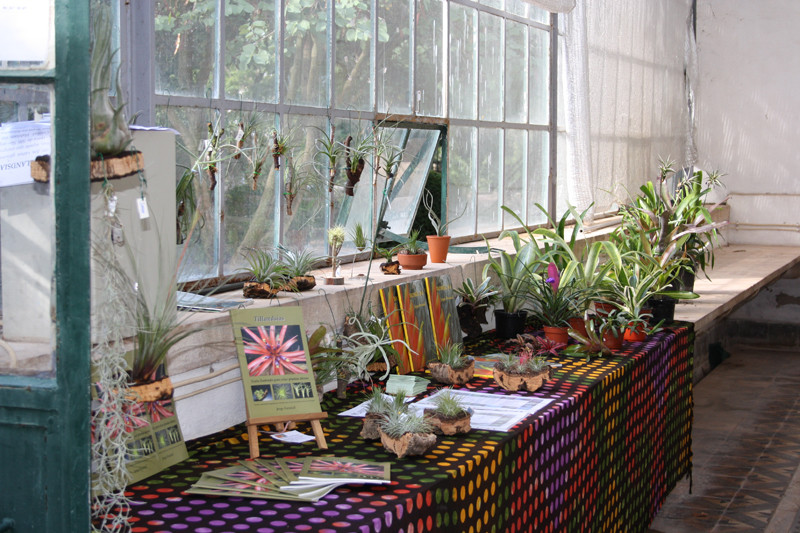 Jardim Botânico da Ajuda Outubro 2010