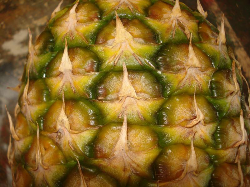 Ananás comosus