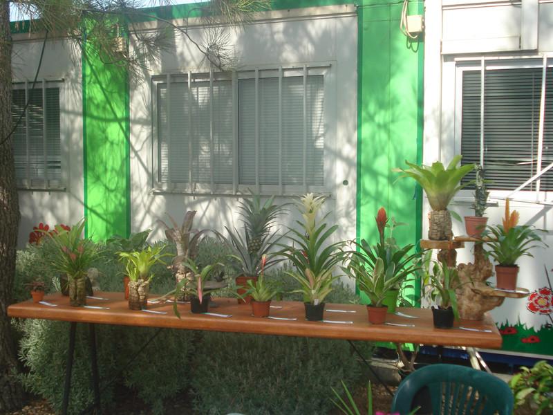 Exposição Bromélias Palmela 2009