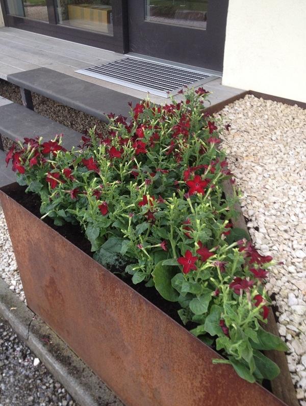 Firmenbepflanzung, Geschäftsbepflanzung, Außenbepflanzung, Eingangsbepflanzung