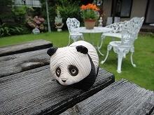 Classic - Young Panda