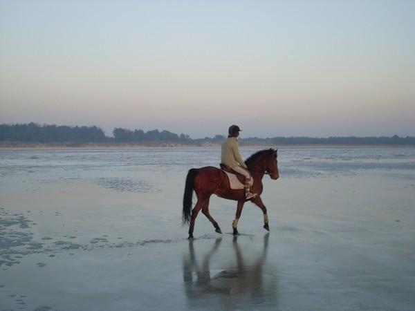 promenade à cheval en baie de somme