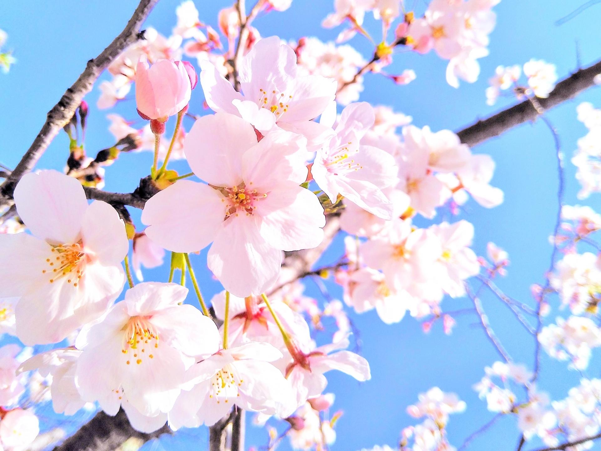 三重県探偵ブログ 春の浮気事情