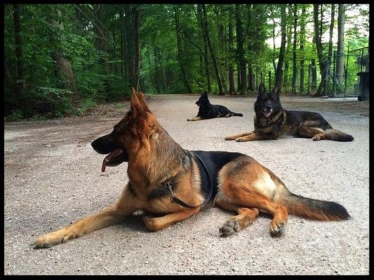 Barina, Cara und Dragos