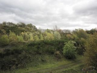 Die Hangflächen im Jahre 2013, Durch die zunehmende Verbuschung gehen wichtige Trockenlebensräume verloren.