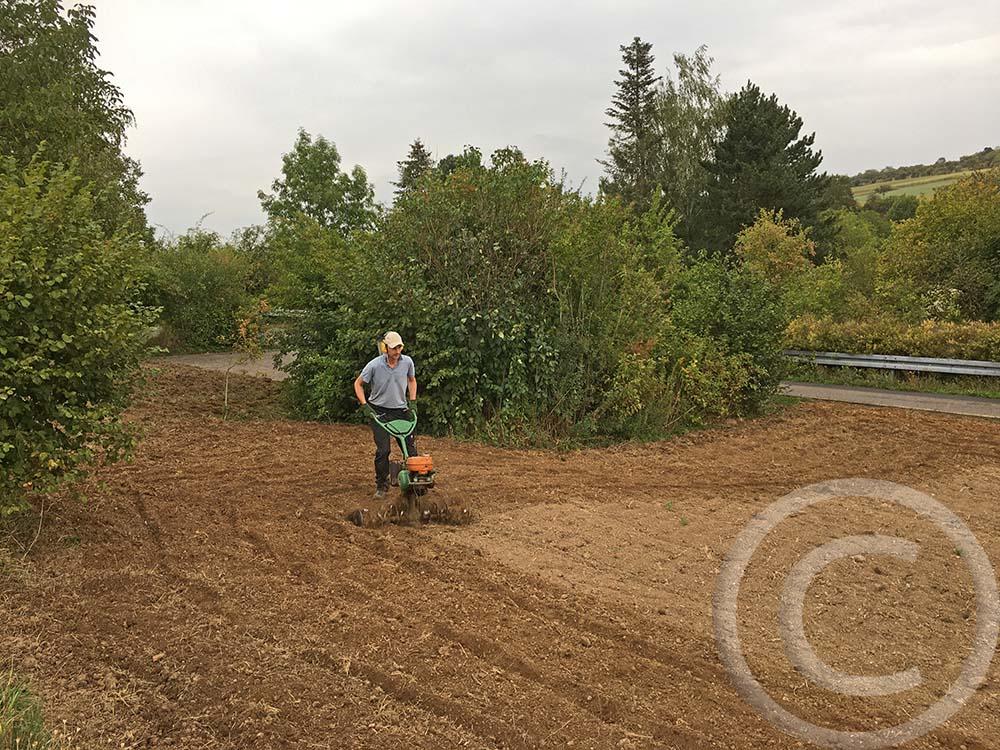 3. Bodenbearbeitung: Eine Händfräse kommt zum Einsatz, es wachsen immer noch Pflanzen aus dem Altbestand durch (05.09.2020)