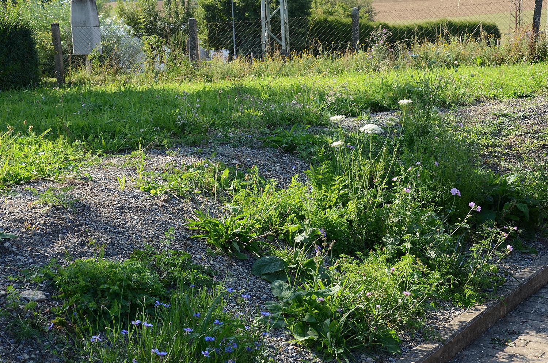 Korrektur: Die Mähgutübertragung funktioniert, auch diese Fläche blüht nun wildblumenbunt (23. August 2019)