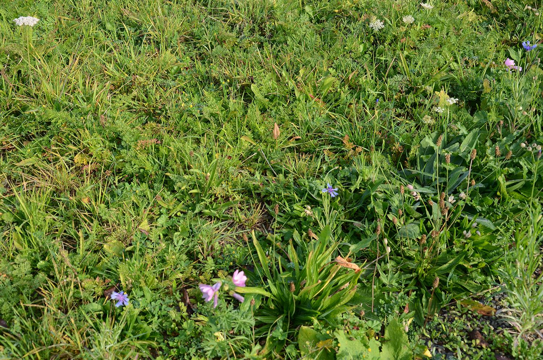 Gesunder, dichter Wildpflanzenbestand: 7 Monate nach der Aussaat blühen sogar im Oktober noch ein paar Wildblumenarten wie Wilde Möhre und Flockenblumen. Honigbienen und Hummeln nehmen das Nahrungs-Angebot dankbar an (15. Oktober 2019)