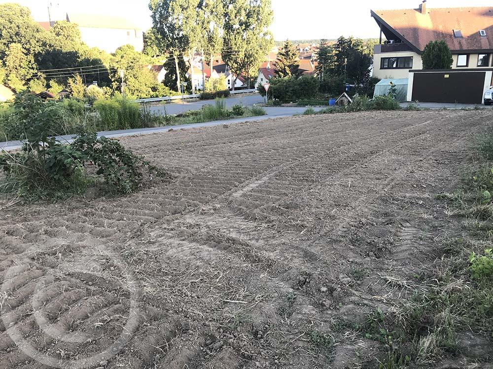 Sonne und Trockenheit als Helfer: Wuzeln und Pflanzenreste trocknen im Sommer an der Bodenoberfläche aus (30.07.2020)