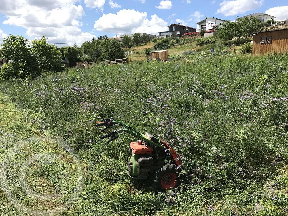 Altbestand runtermähen: Damit eine neue, dauerhafte Wildblumenwiese entstehen kann, wurde der Altbestand mit dem Balkenmäher tief gemäht (11.07.2020)