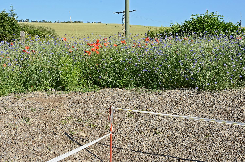 Aus Fehlern lernen: Wegen zu starker Sonneneinstrahlung keimte das Saatgut trotz Bewässerung nicht an der Schräge. Wir arbeiten 2cm gütegesicherten Grün-Kompost oberflächlich ein und legen das obere Mähgut zur Samenübertragung hier ab (28.Juni 2019)