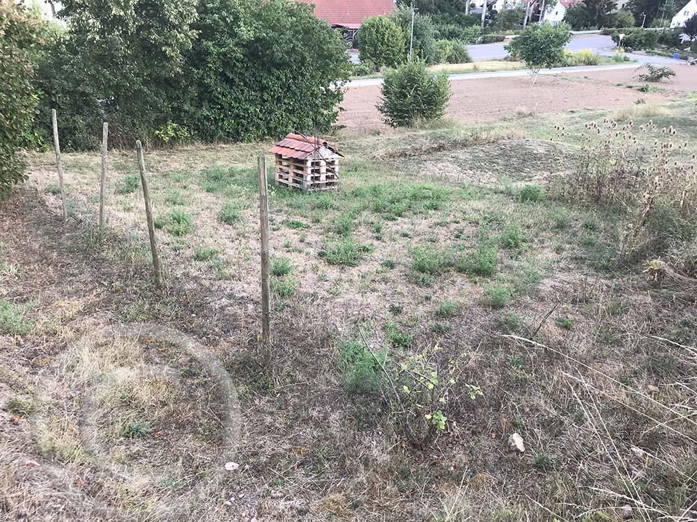 Insektenhaus: Das selbstgebaute Wildbienenhaus stand auf einer Altgrasfläche. Hier sollten mehr Blumen wachsen (22.08.2020)