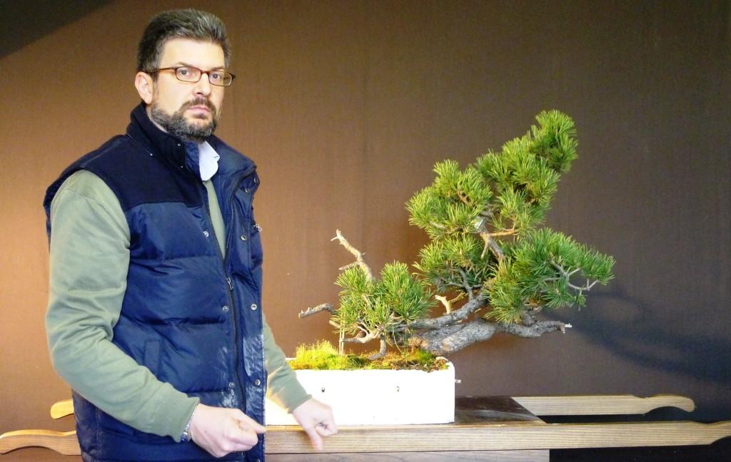 CLAUDIO Pinus mughus yamadori
