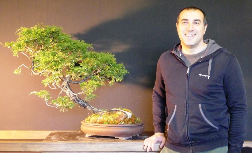 EMANUELE Juniperus sabina yamadori