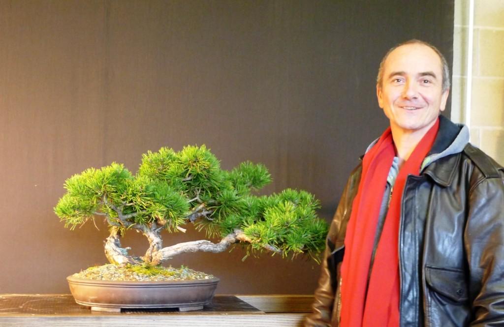 OLIVIER Pinus mughus yamadori