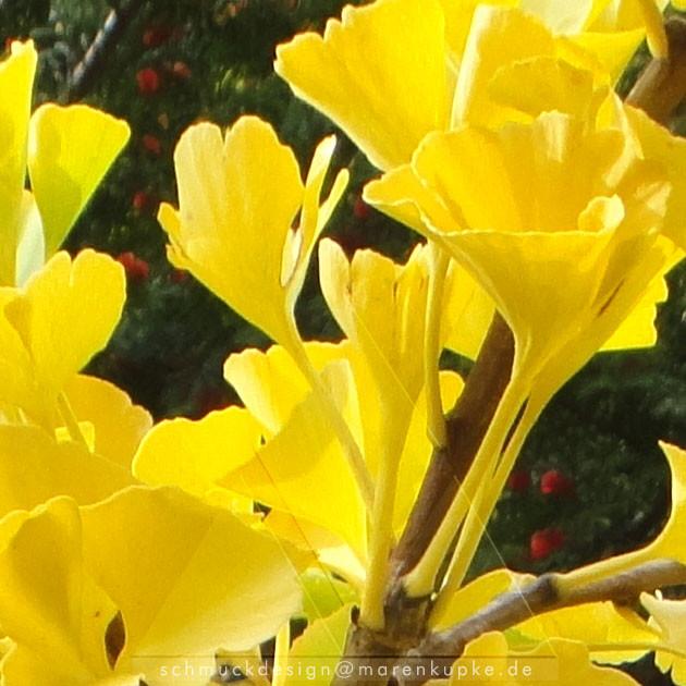 strahlend gelbe Herbstblätter vom Ginkgobaum