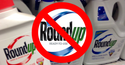 Allegedly Monsanto has known for decades that glyphosate and specifically Roundup could cause cancer