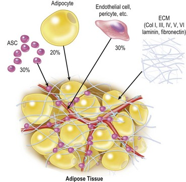 The extracellular matrix gets bent out of shape when fat cells shrink - your body considers that an injury
