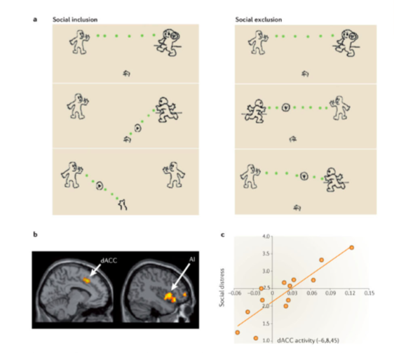 Activity in the anterior cingulate cortex was more rampant when people were excluded versus when they were included in a game of Cyberball game (Eisenberger, 2012)