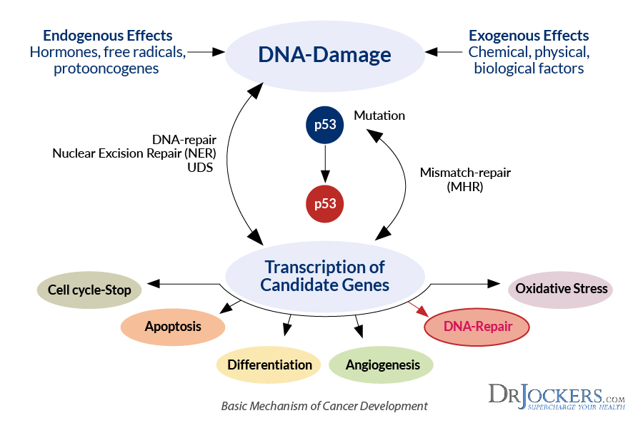 toxicity -> dna damage -> mutations -> cancer
