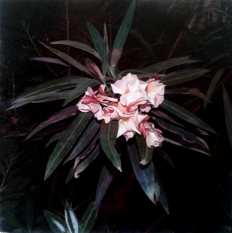 Nerium oleander, 40x40 cm