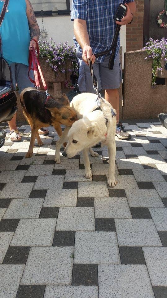 Ambra & Eddie - heute in Deutschland