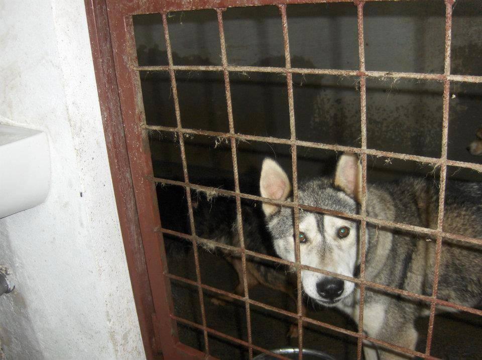 Max - früher im öffentlichen Tierheim